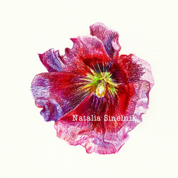 Purple mallow digital download from original pencil drawing red flower clip art
