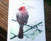 ACEO Photo Cardinal in Thicket Photo
