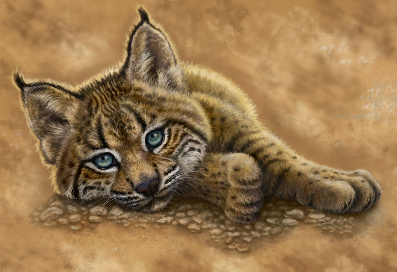 Baby Lynx Drawing