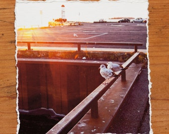 Seagulls 4.5x4.5 inch giclee fine art photography print with torn edge
