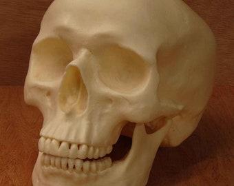 Realistic Replica Human Skull (Natural)