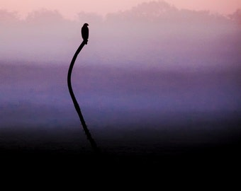 Hawk on a dreamy foggy morning - contemporary art - soft colors - Wildlife Decor - pink, lavender, purple