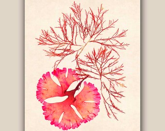 Seaweed art, Seaweed poster, Red Seaweed Print, Pressed seaweed Art, Marine Wall Decor, beach cottage decor, ocean art, Nautical art, 11X14
