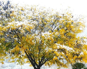 Yellow Tree in Pennsylvania SNOW - Blank 5 X 7 NOTECARD frameable Art Photo with FREE Origami Crane