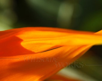 Bird-of-Paradise PETALS Macro - BLANK 5 X 7 Nature NOTECARD frameable Art Photo with Free Origami Crane - Plant Closeup