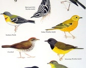 Birds - Bananaquit, Golden Winged Warbler, Yellow Warbler, Ovenbird - Vintage 1980s Bird Book Plate Page