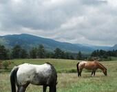 Appaloosa Horse Photo -Western Wall Art -Colorado Gift -Mountain Landscape -Horse Lover Gift -Ranch Decor -Colorado Fine Art Photography