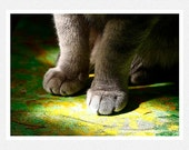 Cat Photography, spring green, cat paws,  Cat Painting fine art photography print
