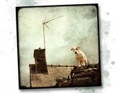 Chien de Guet - 8x8 Fine Art Print - Dog Photography - Etsy Wall Art - TFTeam - Animals - MarcLoretPhotography
