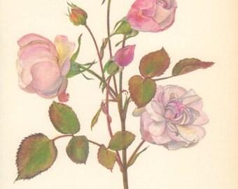 Floribunda Rose, Vintage Rose Print, 8x10 Botanical Print 115, Pink Rose, 1966 Country Cottage Decor