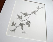 Ivy botanical drawing // black and white art // nature art // English ivy drawing // minimalist art