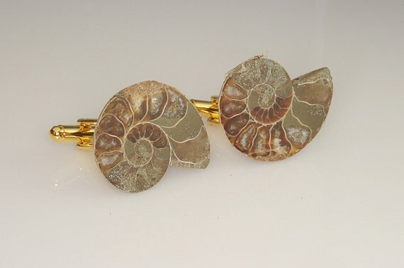 Prehistoric Snail Fossil Cufflinks Ammonite 38mm Very sharp Great Price