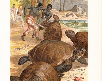 1890 Antique fine TURTLE fine chromolithograph, historical hunting of turtles on the island, antique 122 years old