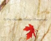 Guy Gifts for Him,Nature Lover Gift,Christmas Present,Stocking Stuffer,Xmas,Holiday,Fall,Autumn Art,Photo of Maple Leaf,Home Decor,Outdoorsy