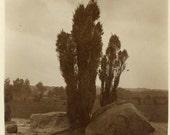 "Vintage Photo ""Desert Plant"", Photography, Paper Ephemera, Antique, Snapshot, Old Photo, Collectibles - 0007"