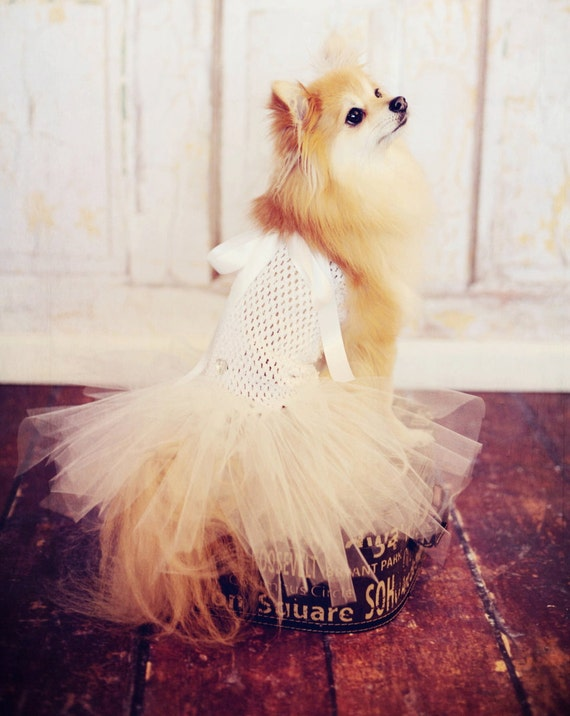 Items Similar To Dog Tutu Wedding Dress For Toy Breeds
