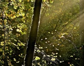 Rays of Light Photo, Landscape Photography, Fine Art Photo, Forest Photography, Inspirational Photo, Wall Art, Home Decor