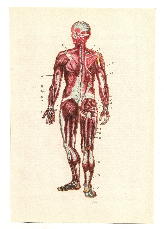 2 Vintage Anatomical Prints Baby Pregnant Medical Diagrams