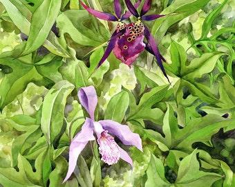 "Orchids - 8x10"" Giclee Art Print"