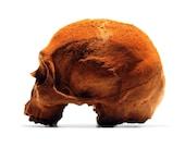 100% Chocolate Skulls, Anatomically Correct Chocolate Skulls