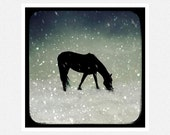 Horse Photography, black and white, snow, Cold Snow, fine art photography print 8x8 - moonlightphotography