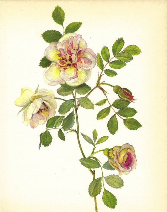 Rose Print Floral Vintage Flower Print Wall Decor Art