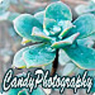 CandyPhotography