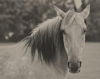 Fine Art Print, Horse Art, Equestrian Print, Horse Photography, Farm Life, Rural, Animal Print, Nature Art, Home Decor, Horse Wall Art