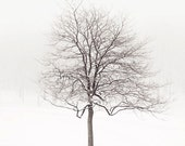 "Lone Tree in Snow, Winter Landscape Photography, Tree Art Print, Minimalist Art Print, White Wall Art, Nature, ""Winter Solstice"""