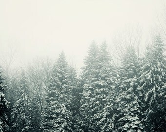 Ever Green - Trees, Fog, Tree Art, Winter Print, Landscape Photography, Snow, Winter Photography, Forest, Nature, Rustic Winter Decor