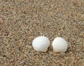 Natural Seashell Earrings - Small White Natural Seashells - Silver 925 Posts - Seashell Post Earrings