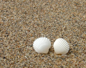 Natural Seashell Earrings - Small White Natural Seashells - Silver 925 Posts - Seashell Post Earrings