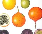 Passion Fruit, Calabash, Sweet Granadillas Exotic Fruit Print Vintage Cookbook Color Book Page Plate 1991