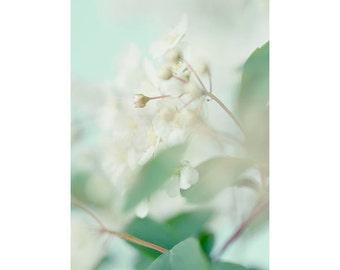 Mint Decor,  Abstract  Photograph, Floral Art Print, Bridal Veil Spirea Flower Photography