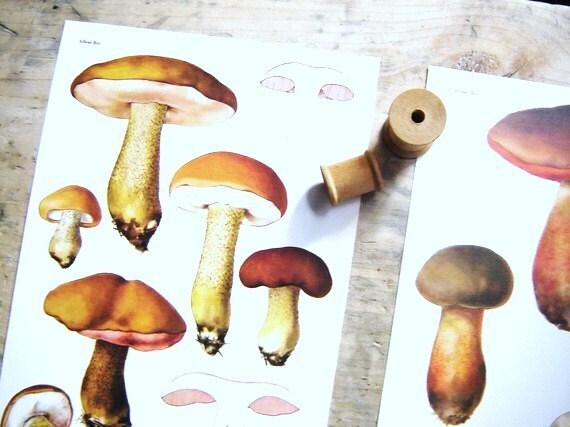 Vintage Poisonous Specimens Chart- Burnt Orange Mushrooms Ilustrations Set of Two