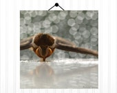 Moth Print 10X10 Photograph...Woodland Scene Beautiful Moth Entomology Natural History Large Eyes Forest Moth Bokeh Nature Lover - machelspencePHOTO