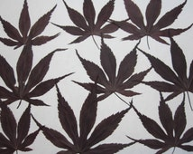 Dried Pressed Flowers Greenery for Crafting - Japanese red maple leaves