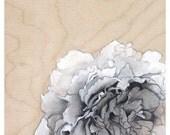 Peony Art Flower Print