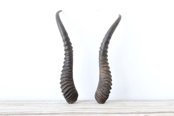Pair of gazelle horns by gallivantinggirls on etsy