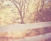 sale 25% off landscape photography, dreamy tree nature photograph, summer sunshine, autumn yellow orange, purple, country white fence, warm