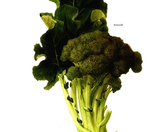 Vintage Print  - Broccoli, Brussels Sprouts - Book Plate  - 1965
