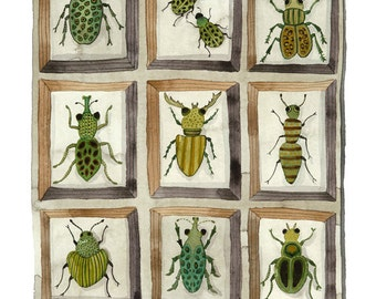 Beetles and Weevils Print, entomology specimens collection, giclee art print, watercolor reproduction