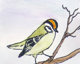 Original Watercolor and Ink ACEO Painting, Watercolor and Ink Golden Crowned Kinglet ACEO, Original Watercolor and Ink Bird ACEO Painting