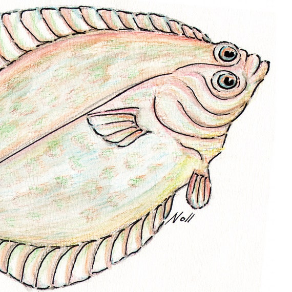Flounder Fish Drawing