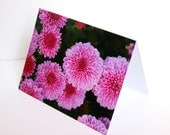 SALE - Pink Chrysanthemums - BLANK 4x6 Photo Notecard