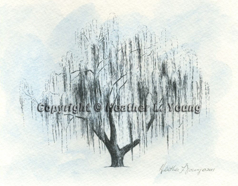 Old Willow Tree Drawing Weeping Willow Tree Sketch