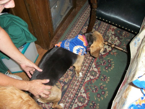 New York Mets Dog Scarf, Small