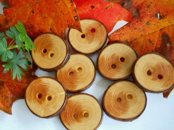 8 Wooden Buttons Michigan White Spruce Tree Branch Buttons 1 1/4 inch 3.1 cm  for Hats, Pillows, Scarves, Sweaters