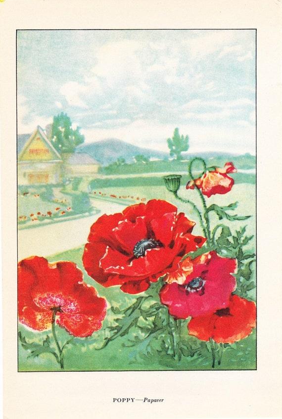 1926 Flower Print - Poppy - Vintage Home Decor Botany Art Illustration for Nature Science Woman Great for Framing