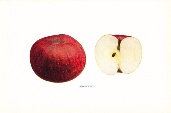 1905 Fruit Print - Jewett Red Apple - Vintage Home Kitchen Food Decor Plate Plant Art Illustration Great for Framing 100 Years Old